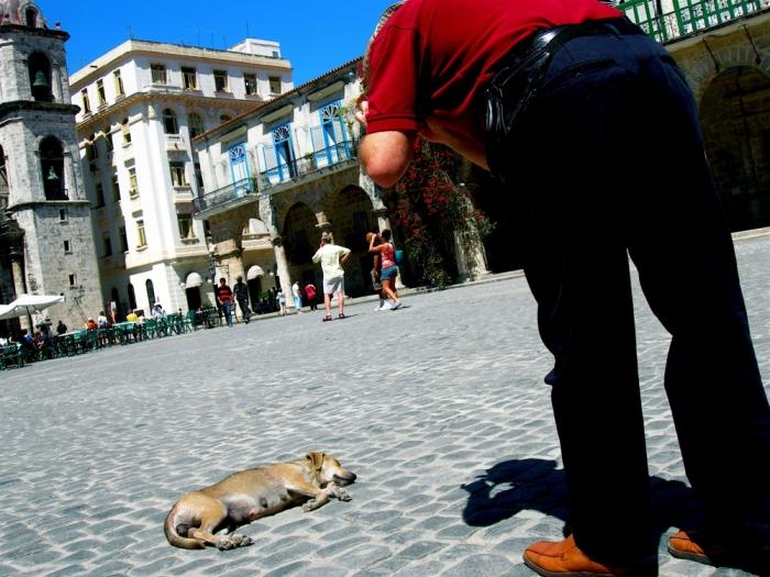 chien & touriste / dog & tourist