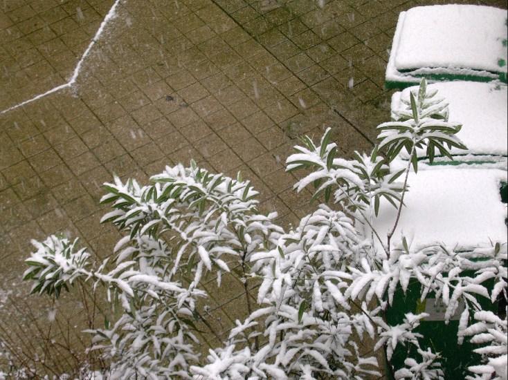 Il neige sur la cour