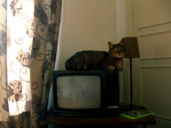 chat et télé / cat and tv