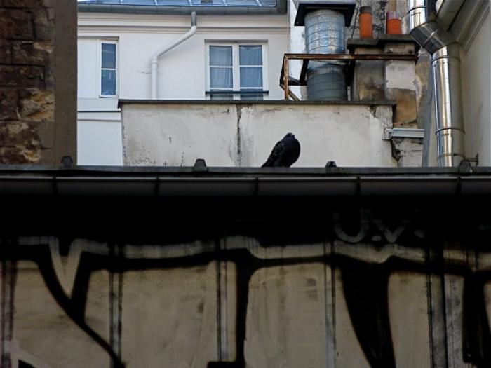 paysage parisien / parisian landscape