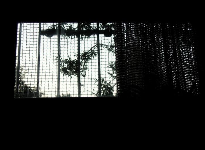 la fenetre / the window