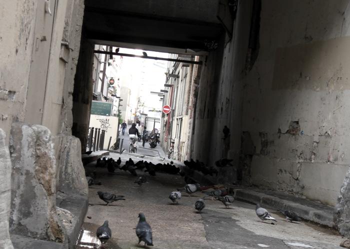 la fête des pigeons / a pigeons party