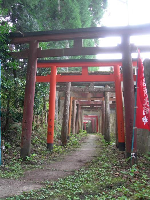 le chemin / the path