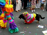 chien gay / gay dog&#13;Pas de commentaires.