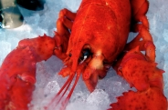 homard / lobsterPas de commentaires.