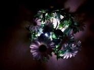 fleurs / flowers1 commentaire.