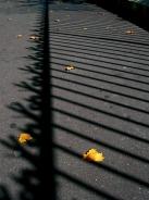automne / autumn1 commentaire.