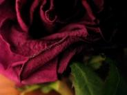 rose / pinkPas de commentaires.