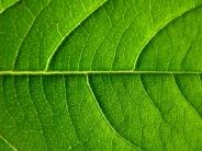 vert / green6 commentaires.