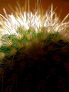 cactus1 commentaire.