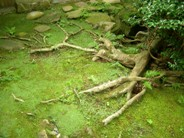racines / rootsPas de commentaires.